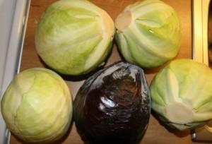 sauerkraut cabbage